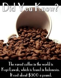 fun fact 19